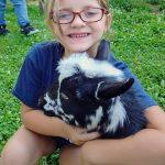 Nigerian Dwarf goats 3